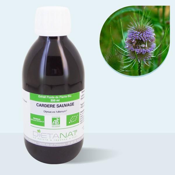 Cardère sauvage bio - 250ml Extrait de plantes fraiches bio