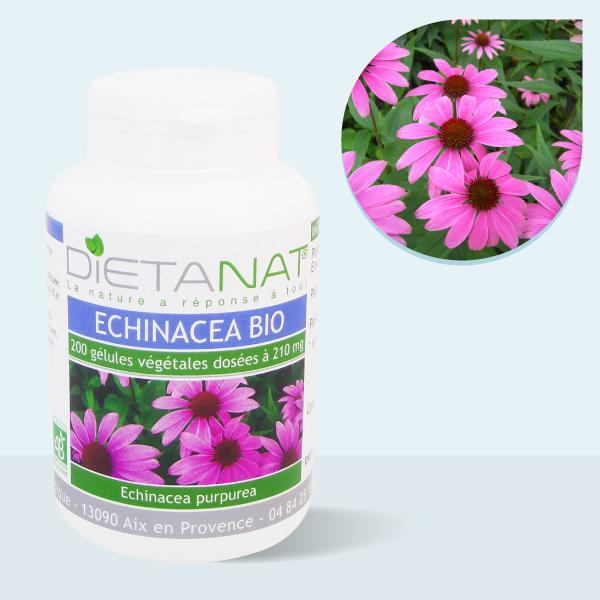 Echinacea Purpurea bio - 200 Gélules végétales 210mg