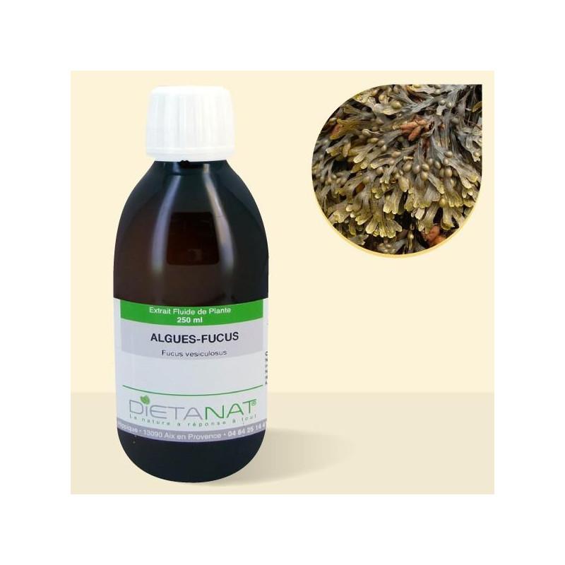 Fucus Vésiculosus - 250ml Extrait de plantes fraiches
