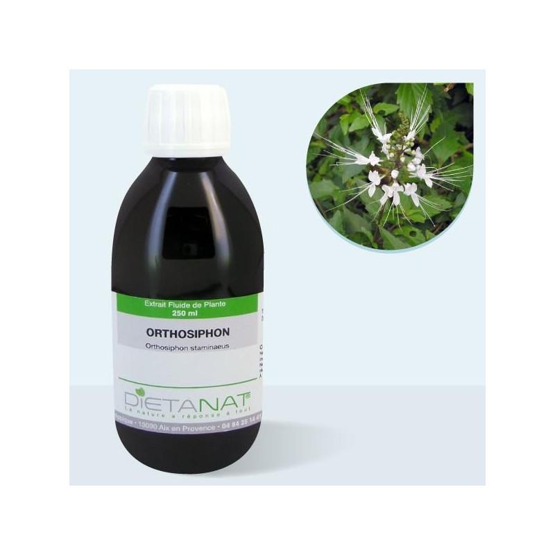 Orthosiphon - 250ml Extrait de plantes fraiches