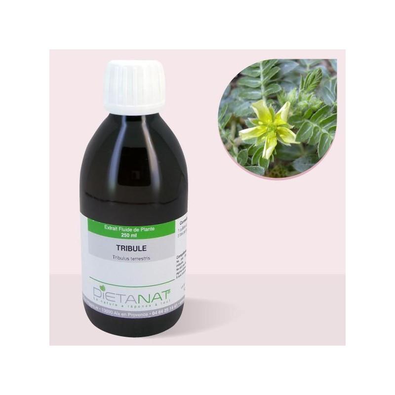 Tribulus Terrestris - 250ml Extrait de plantes fraiches de Dietanat