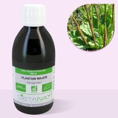 Plantain Major bio - 250ml Extrait de plantes fraiches bio